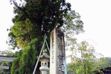 야나기노 야시로 신사의 이 돌 마커는 1916 년에 세워졌다