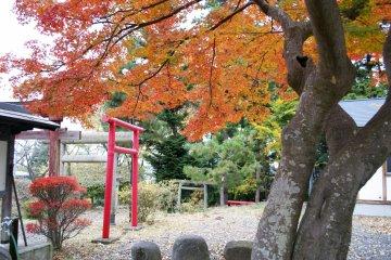 <p>Vivid autumn colors&nbsp;brighten up Kitaro Inari&nbsp;Shrine! It&#39;s a small shrine, yet so beautiful</p>