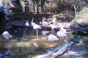 Omiya Park Zoo.