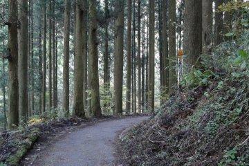 เส้นทางเดินป่าไปยังจุดชมวิว