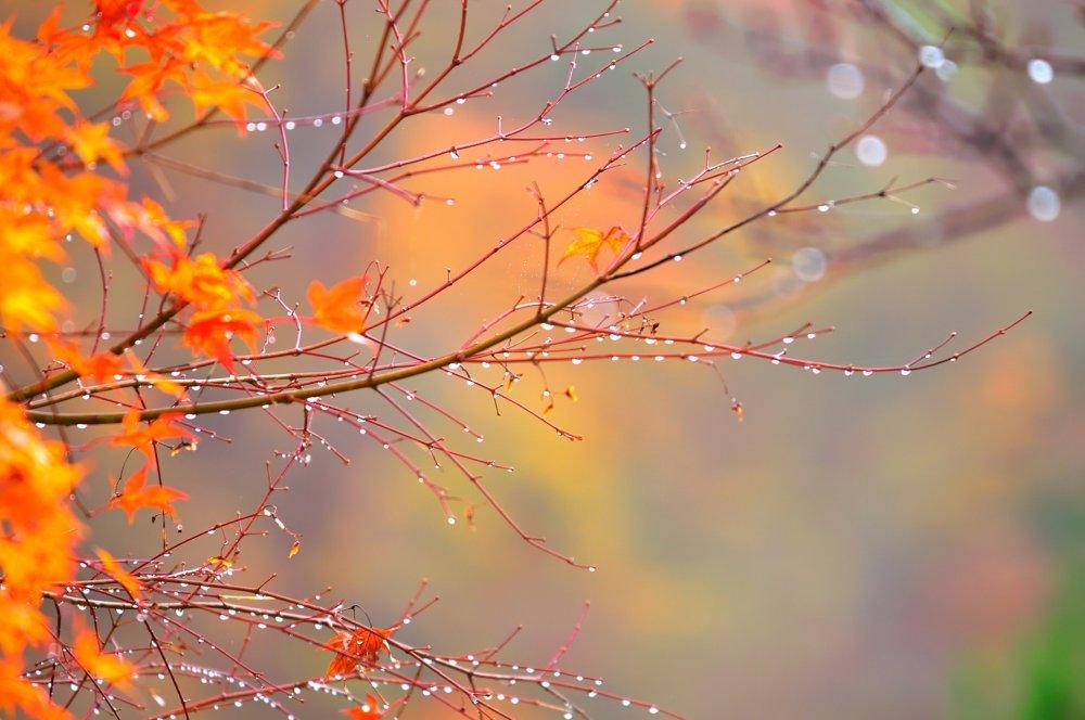 葉の落ちた裸の枝に雨露が光る