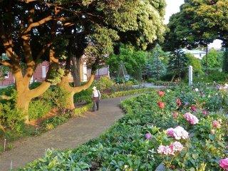 Pleasant little paths crisscross the park.