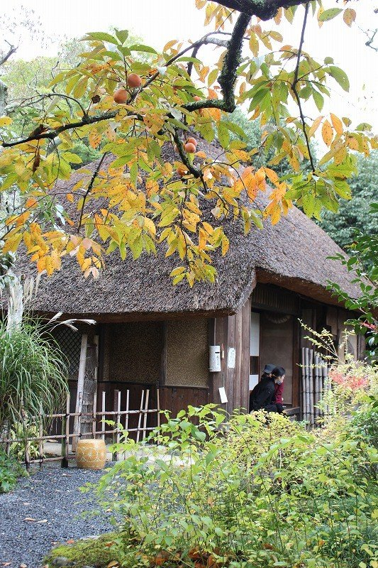 """With persimmons ripening on the tree, the """"Hut of Fallen Persimmons"""" has a certain elegance about it"""