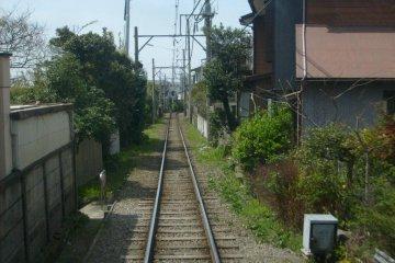 <p>Getting close to the locals around Gokurakuji</p>