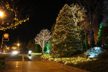 <p>These illuminated trees lead you to the Royal Park Hotel.</p>