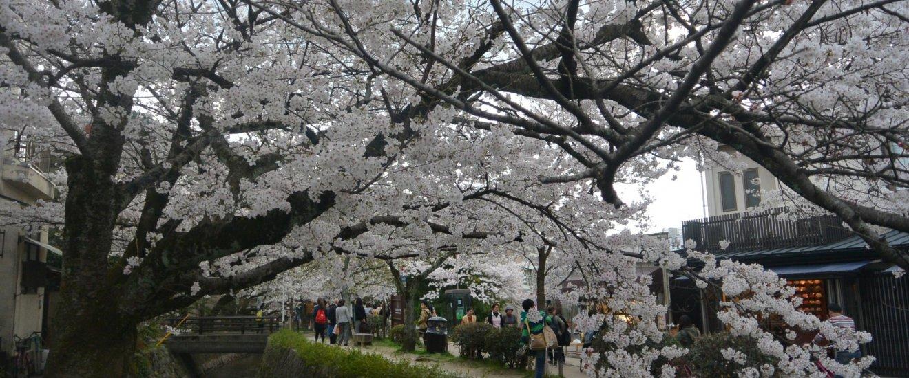 Sepanjang Philosopher Path pada Musim Semi