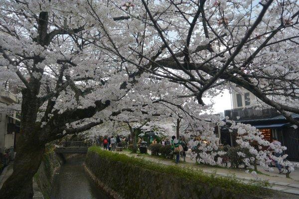 Hasil gambar untuk kyoto maruyama garden 600 x 400