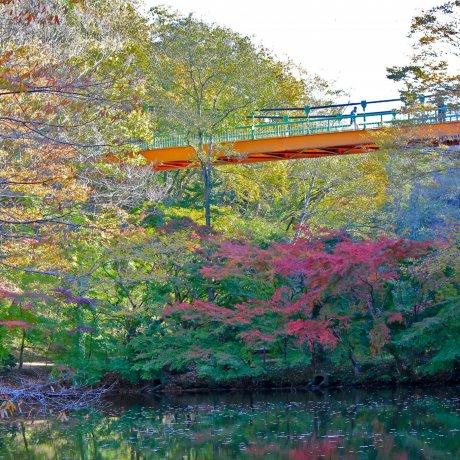 Jembatan Taman Alam Izumi di Chiba