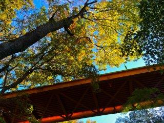 Jangan lupa untuk melihat ke atas! Warna yang indah dari jembatan dan daun sangat menawan sepanjang musim gugur.