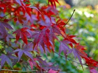 Izumi Nature Park in Fall, Chiba