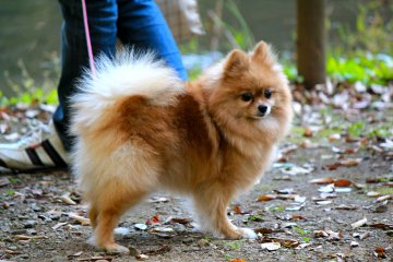 <p>Izumi Nature Park is dog friendly</p>
