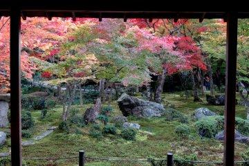 Dedaunan Musim Gugur di Kuil Enkoji