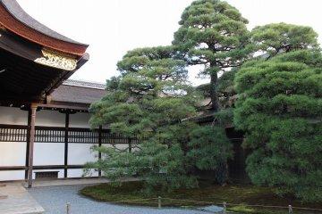 오쿠루마요세 옆에는 멋진 소나무가 서 있다