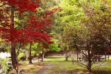 <p>Странное место... С одной стороны дорожки весна, с другой - осень.</p>