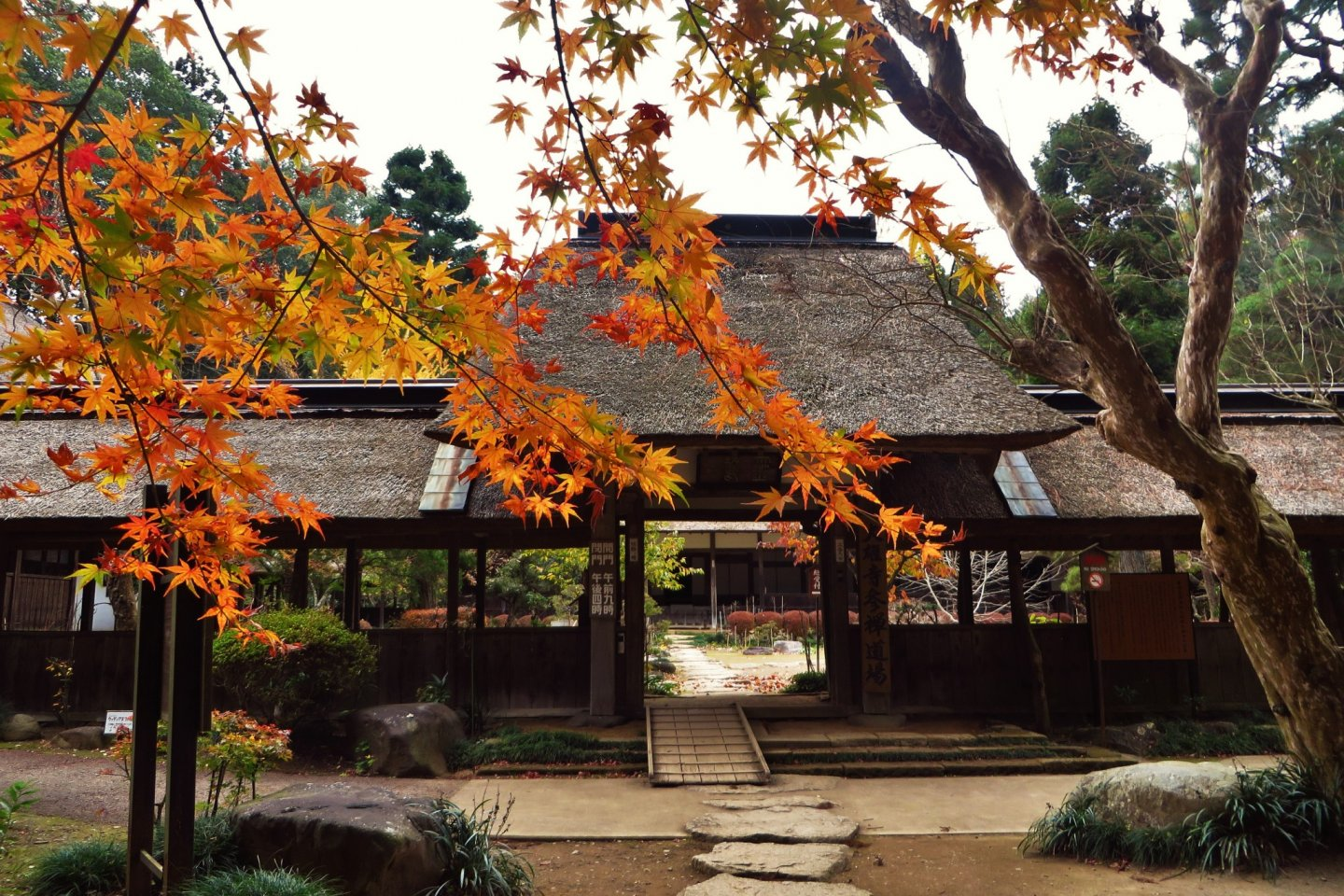 The entrance to Daiyuji(especially beautiful with the autumn leaves)