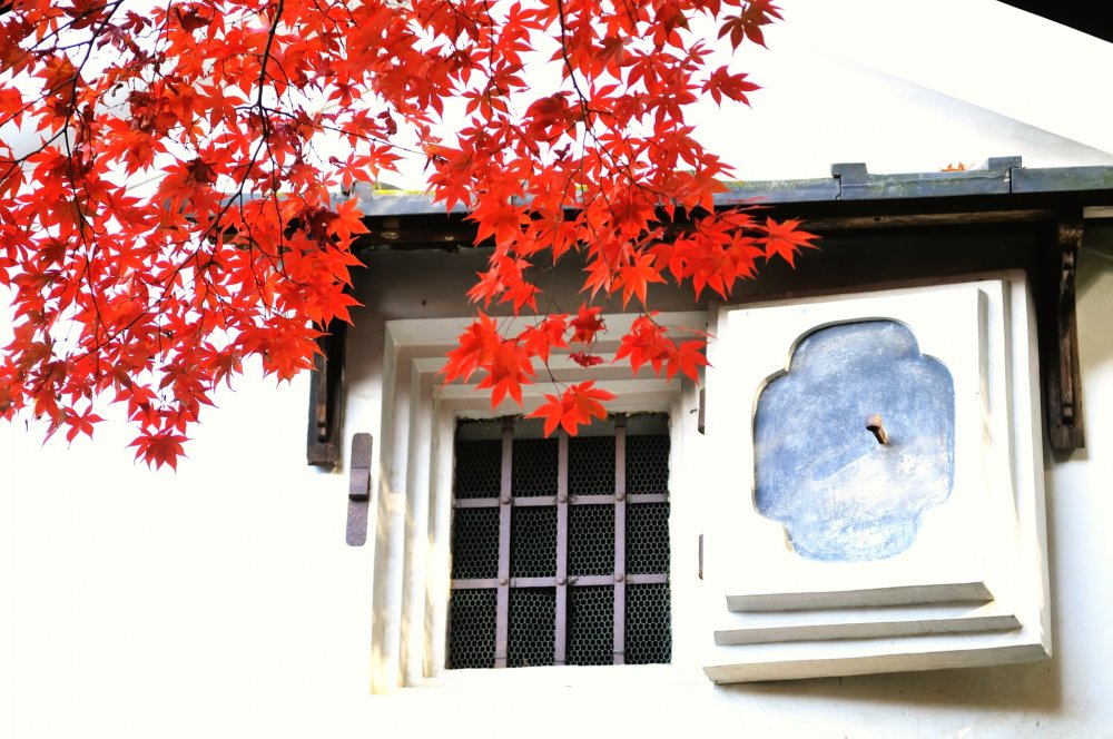 The striking contrast between a white wall and red maple leaves attracts your attention