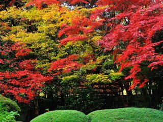Brilliant autumn colors are pleasing to the eyes of the beholders