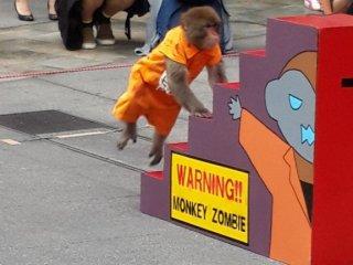 Sang monyet sedang bersiap melaksanakan aksinya dengan menaiki tangga.