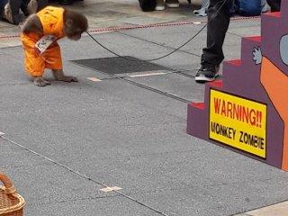Di akhir pertunjukkan sang monyet membungkukkan badan tanda hormat ala Jepang kepada para penonton.