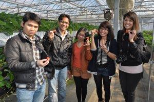 Kunjungi kebun stroberi yang siap berbuah di musim dingin Januari-Februari 2015.