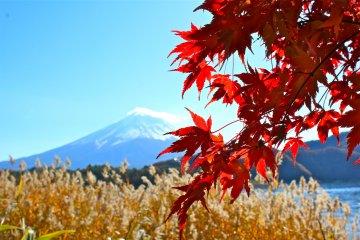 <p>Mt. Fuji at Lake Kawaguchiko in Autumn</p>