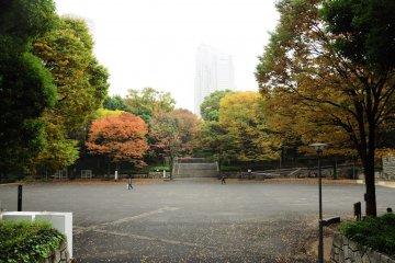Early Autumn at Shinjuku Chuo Park