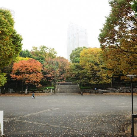 Early Autumn at Shinjuku Chuo Park