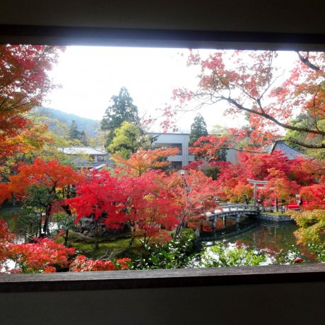 Autumn Scenery of Eikando