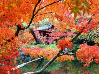 호조 연못 주변에서 아름다운 단풍 너머로 보이는 조그만 절