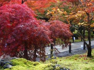 묘하게 다른 붉은 단풍색들이 멋진 풍경을 자아낸다.