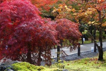 <p>묘하게 다른 붉은 단풍색들이 멋진 풍경을 자아낸다.</p>
