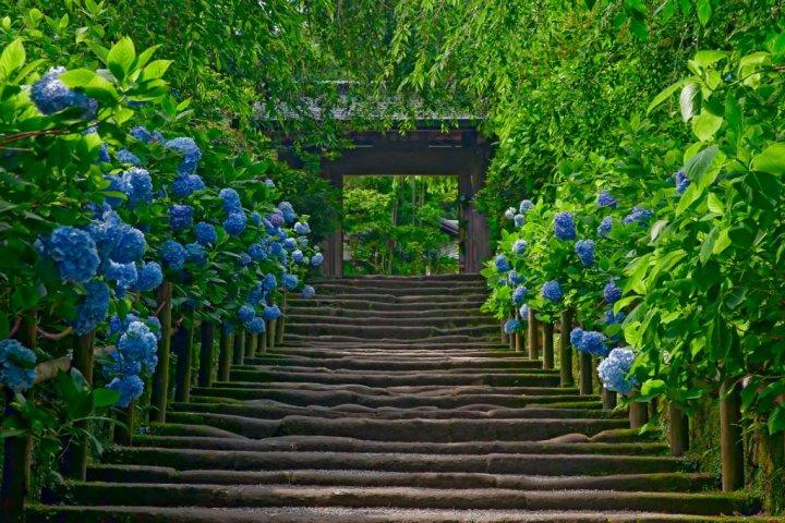 Kita-Kamakura's Meigetsu-in Temple