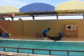 L'aquarium de Kamo à Tsuruoka