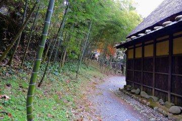 Бамбуковая рощица рядом с поселком, по которой можно прогуляться по дорожке