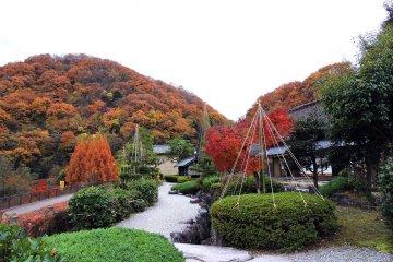 В конце ноября, когда осенние листья достигают пика своей красоты, на некоторых зеленых деревьях уже устанавливают защиту от снега