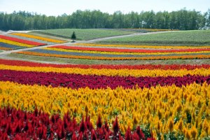 The vibrant colors of the flowers are stunning.