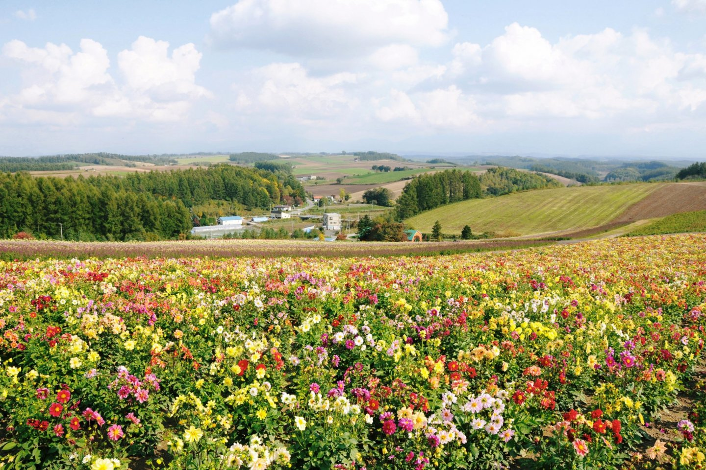 The garden sits on the top of a hill and has amazing views of the surrounding farms.