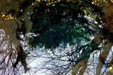 Отражение деревьев в одном из пруду