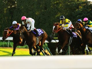 Racehorses dedicate their lives just to running