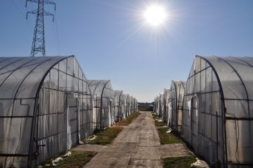 <p>农业镇拥有2.2公顷的草莓温室</p>