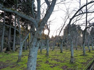 An army of bare trees in the park
