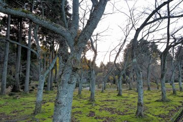 공원에 있는 벌목의 군대