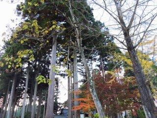 Espreitando o Santuário Ajimano por entre as árvores altas