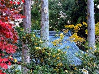 A sala de oração rodeada de árvores coloridas