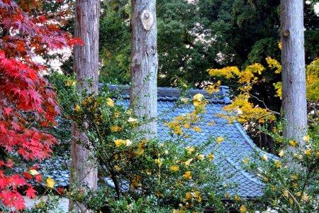 Santuário Ajimano em Echizen, Fukui
