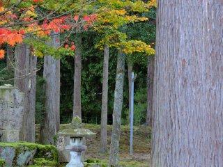 Lanterna de pedra erguendo-se no meio de altos cedros