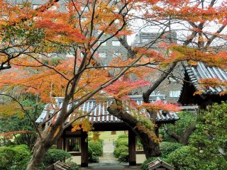 The garden is especially beautiful in autumn