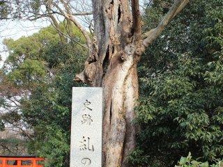 糺の森の石碑。下鴨神社の南北に細長い敷地全体の森の名称である
