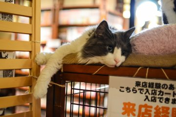 <p>The cats are relaxed around people, and used to their presence</p>