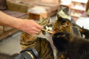 Feeding time at the cat cafe